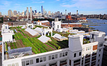 Brooklyn Grange, world's largest rooftop garden (NY)